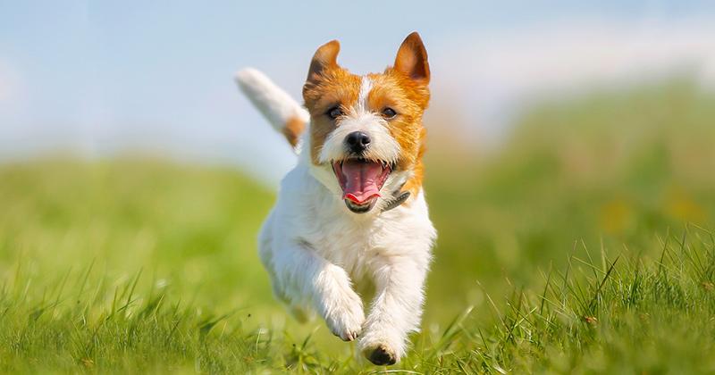 Freilauf für Hunde und Zustand Grünflächen